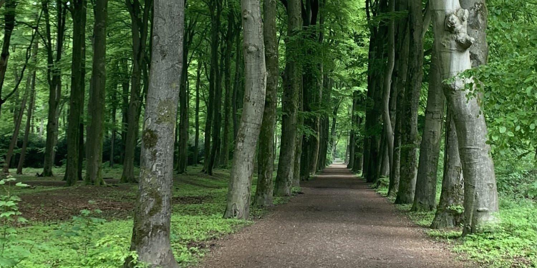 Bomenlaan in Hoekelemse bos in Ede